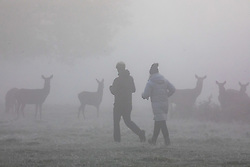 © Licensed to London News Pictures. 27/11/2020. London, UK. Walkers enjoy an early morning stroll through the fog in Richmond Park with deer in the mist. Walkers, cyclists drivers and Black Friday shoppers were hit with dense fog and a heavy frost this morning as they did the daily commute through Richmond Park, South West London. Yesterday Health Secretary Matt Hancock set out his plans for the end of lockdown on the 2 of December and introduced a new Covid Tier 2 restriction system for London with shops, pubs and restaurants to open up again for the Christmas period. Photo credit: Alex Lentati/LNP