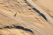 The lone cyclist, Luxor, Egypt