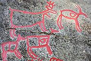 Rock carvings of reindeer; Rangifer tarandus and Moose; Alces alces; Glösa, Jämtland, Sweden