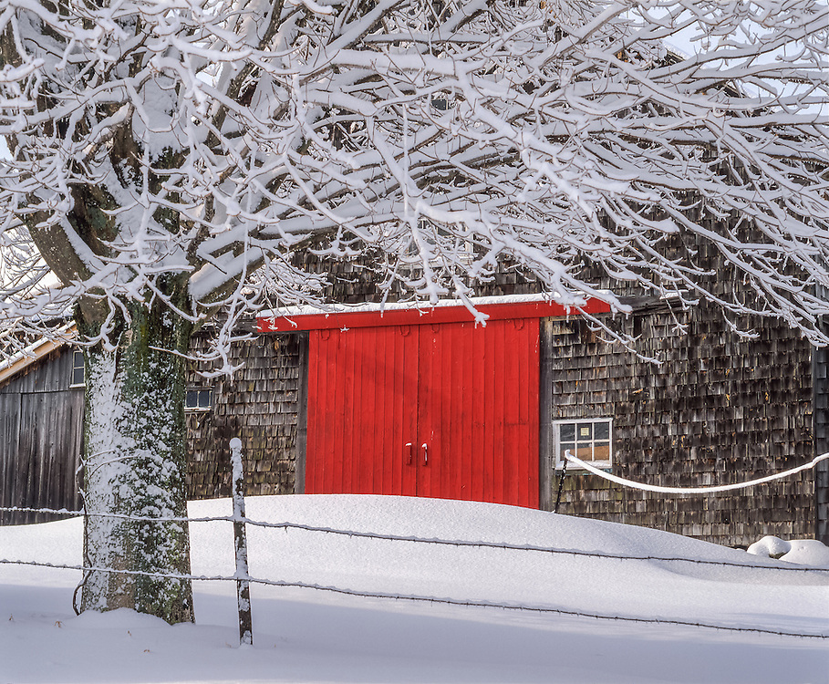 Barn with bright red doors after fresh snow, snow covered tree in foreground, Andover, NH