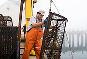 Lobster fisherman taking up traps for the off season, McMillan Warf, Provincetown, Cape Cod, Massachusetts