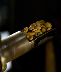 Halfway through the roasting process, coffee beans begin to take on the familiar golden brown to deep ebony color -- depending on the beans' origins and the roaster's preference -- at Devout Coffee, Tuesday, April 5, 2016, in Fremont, Calif. (Photo by D. Ross Cameron)