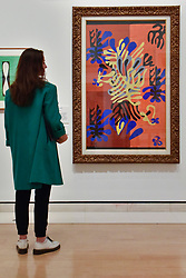 """© Licensed to London News Pictures. 01/08/2017. London, UK. A visitor views """"Mimosa"""", 1949-51.  Preview of """"Matisse in the Studio"""", at the Royal Academy of Arts, Piccadilly, the first exhibition to consider how the personal collection of treasured objects of Henri Matisse were both subject matter and inspiration for his work.  Around 35 objects are displayed alongside 65 of Matisse's paintings, sculptures, drawings, prints and cut-outs.  The exhibition runs 5 August to 12 November 2017.  Photo credit : Stephen Chung/LNP"""