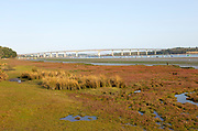 Salt marsh vegetation on foreshore mud exposed low tide view of river and Orwell Bridge, Ipswich, Suffolk, England, UK