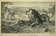 The Missionary's Escape from the Lion From the book ' Missionary travels and researches in South Africa ' by Livingstone, David, 1813-1873; Arnot, Fred. S. (Frederick Stanley), 1858-1914; Published in London by J. Murray in 1899