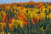 Acadian forest in autumn foliage. Near Edmunston. Madawaska County, Rolling hills. <br />Saint-Joseph<br />New Brunswick<br />Canada