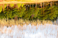 Norway, Sandnes. Reflections in lake.