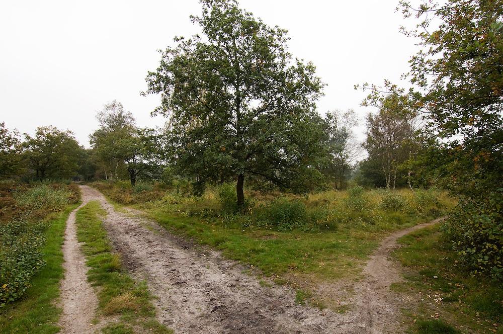 Nederland, Anloo, 15 okt 2006.Militair oefenterrein Anloo ...Foto: (c) Michiel Wijnbergh