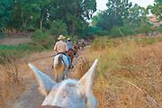 Horse back riding in the Jezreel Valley, Israel.