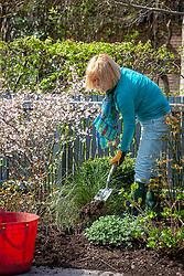Mulching a border in spring