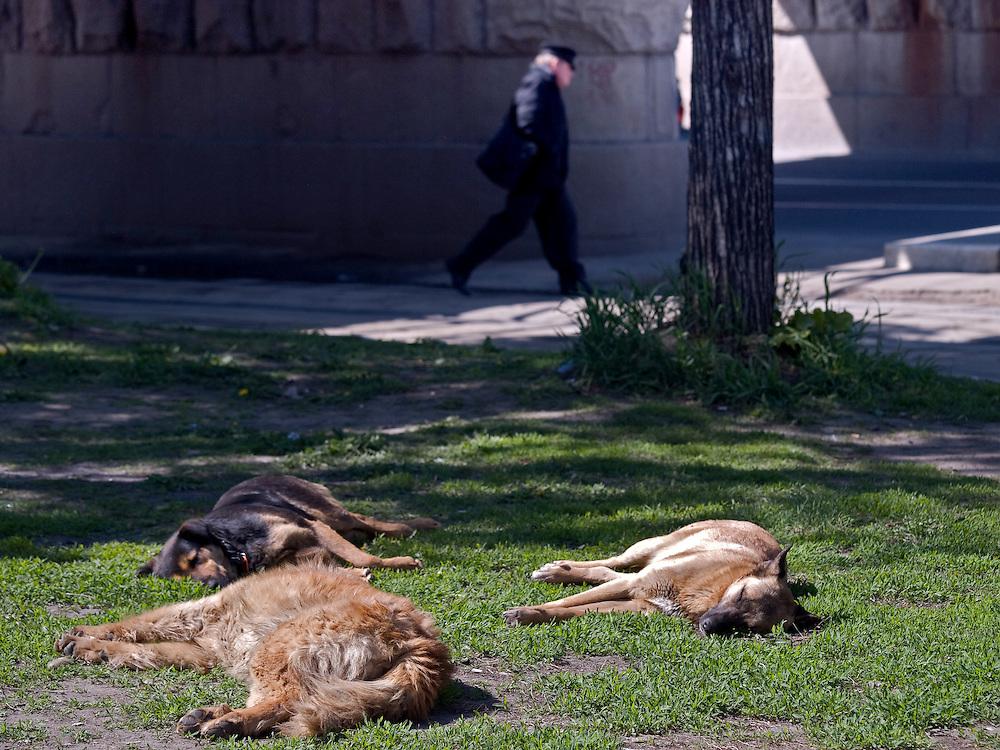 Homeless dogs taking a sun bath on the street in front of the Kazansky Rail Terminal (Kazansky vokzal) in Moscow.
