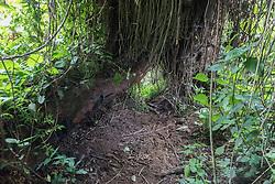 Gorilla Trecking Trail