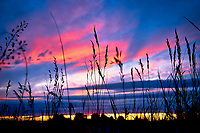 Sunset in Bozeman, Montana amongst tall grass