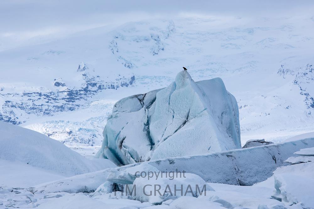 Jokulsarlon glacial lagoon by Vatnajokull National Park. Icebergs from Breioamerkurjokull Glacier, part of Vatnajokull Glacier in South East Iceland