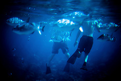 Two Men Swimming with Fish Underwater
