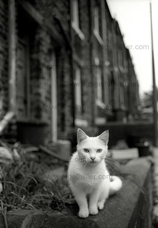white cat, Hebden Bridge, 1986
