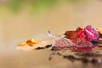 macro studies of beautiful autumn leaves