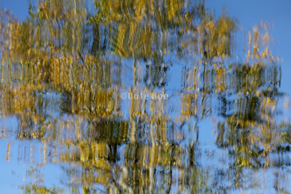 extreme close up of trees reflecting in water