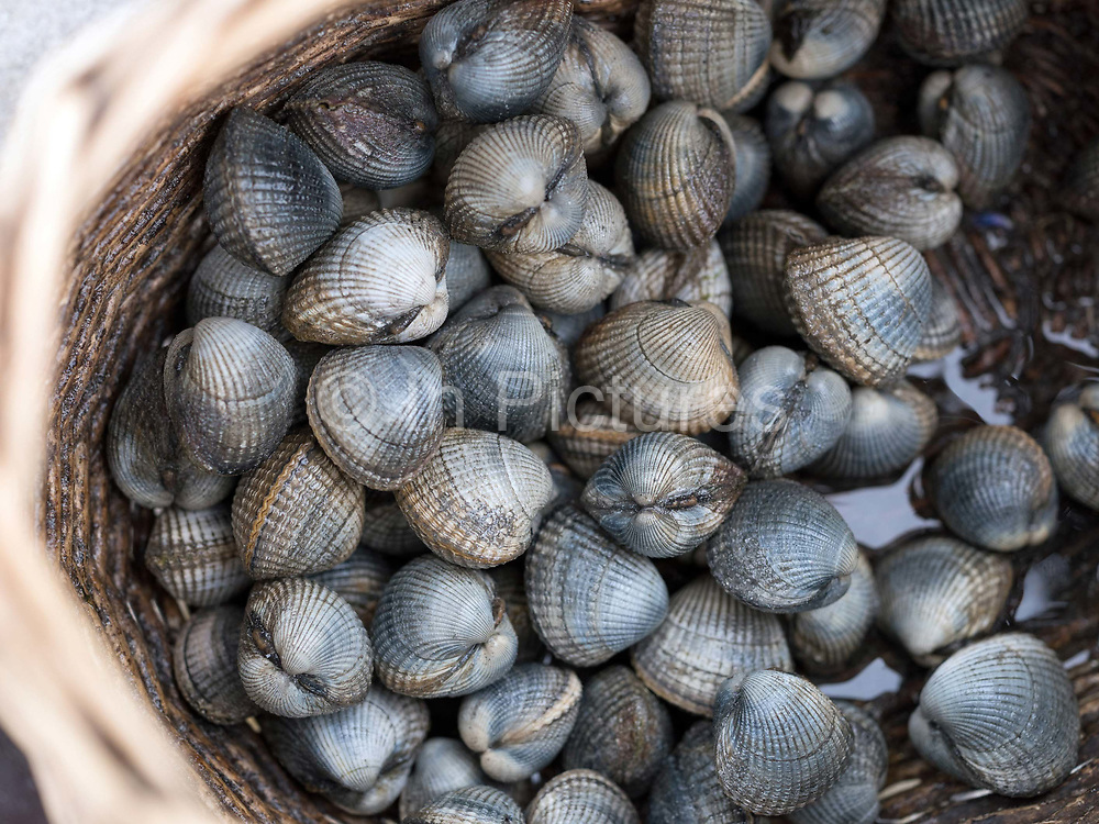 Foraging for cockles on the island of South Uist in the Outer Hebrides, Scotland