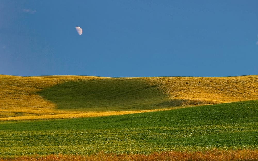 Wheat Fields, Palouse, WA