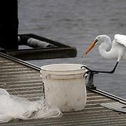 Pigeon Point Docks Beaufort, South Carolina.