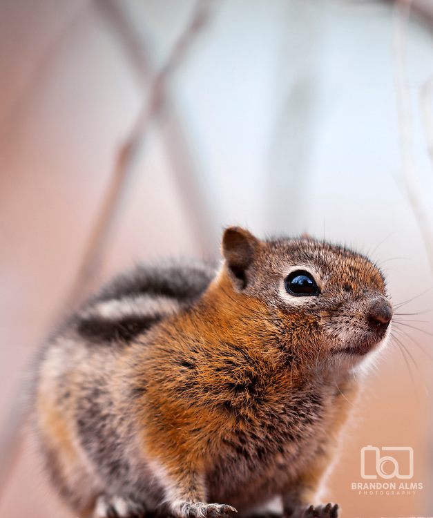 A close up shot of a chipmunk with room for copy space