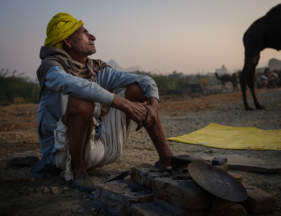 PUSHKAR, INDIA - CIRCA NOVEMBER 2018: Cameleer early morning in the Pushkar Camel Fair grounds. It is one of the world's largest camel fairs. Apart from the buying and selling of livestock, it has become an important tourist destination. The city of Pushkar is a pilgrimage site for Hindus and Sikhs.