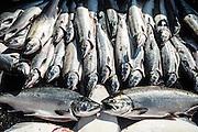 Silver and KIng Salmon, Talon Lodge, Sitka, Alaska