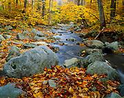 Autumn foliage along Trout Brook west of Hazens Notch, Vermont.