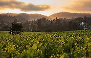 Sonoma County Wine - Sample Gallery