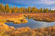 Wetland in autumn<br />Near Wawa<br />Ontario<br />Canada