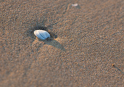 THEMENBILD - eine weiße Muschel im Sand, aufgenommen am 16. Juni 2018, Lignano Sabbiadoro, Österreich // a white shell in the sand on 2018/06/16, Lignano Sabbiadoro, Austria. EXPA Pictures © 2018, PhotoCredit: EXPA/ Stefanie Oberhauser