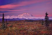 Clouds and Denail lit red by rising sun, Snowline atop denail descending as winter approaches