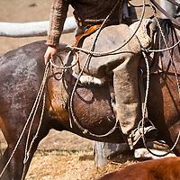 Branding Cattle Patagonia