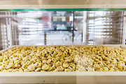 Bologna, La Bottega dei Portici, fresh pasta food lab