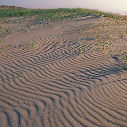 Piping plover tracks.  American beach grass. Beach. Patterns. Dunes.  Seabrook, NH