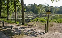 Oisterwijkse Bossen en Vennen, Oisterwijk, Noord Brabant