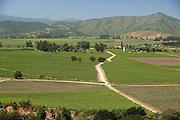 Vineyard, Maipo Valley, Chile