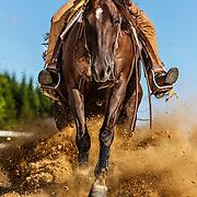 20130128 Reining Quarter Horses