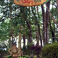 Central America, Costa Rica, Matapalo. Surfboard Art hanging from trees.