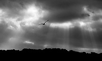 A lone seagull takes to the air as rays of sunlight break through the clouds at Paine's Creek Beach and Landing in Brewster Friday afternoon. 01/10/03 Matt Suess © www.mattsuess.com