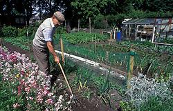 Elderly gardener in his allotment