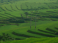 Cao Bang area in the north of Vietnam. Paddy fields.