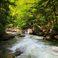 Mid morning sunlight streams through the trees and forest at Meadow Run in Ohiopyle State Park! A beautiful large and rapid flowing stream that leads to the Youghiogheny River!<br /> <br /> Laurel Highlands Area of Pennsylvania by Rachel Cohen