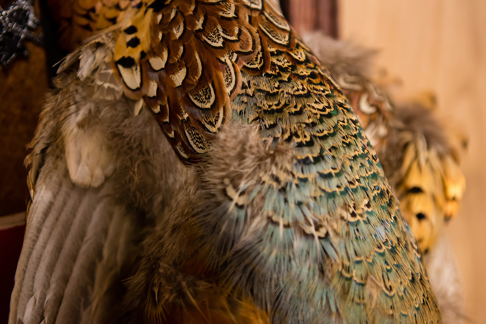 A pheasant wing with its plumage intact hanging on the shop wall.