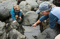Father points out sea creatures to toddler son in a rocky tidepool at Patrick's Point State Park, California.