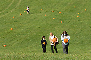 Iron Horse Sanctuary held a Fall Family Pumpkin Picking Festival & Tour in Goshen N.Y., on Oct. 4, 2020.