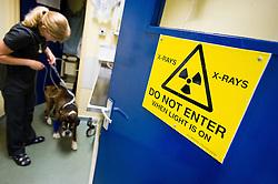 X-ray room at Rushcliffe Veterinary Surgery, Nottingham, UK.