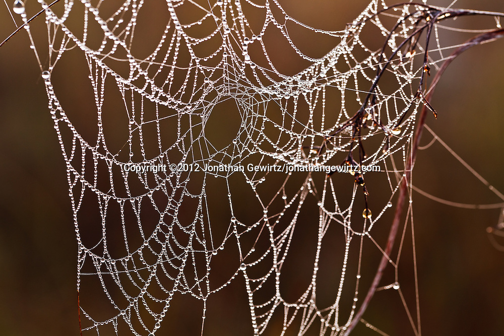 A spider web covered in morning dew drops in the Florida Everglades. WATERMARKS WILL NOT APPEAR ON PRINTS OR LICENSED IMAGES.