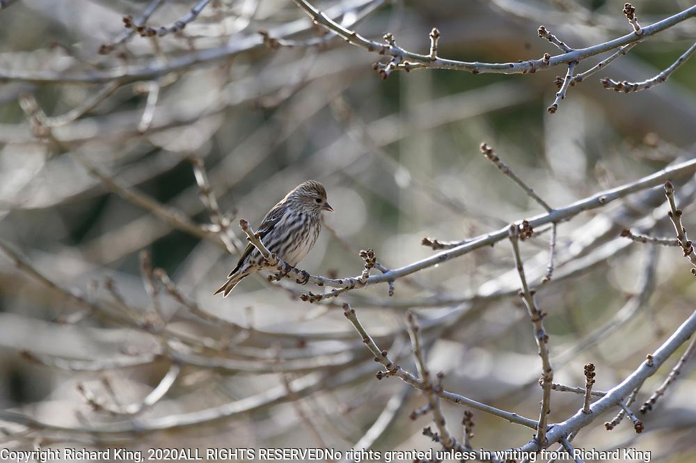 Birding photography from Southern Arizona